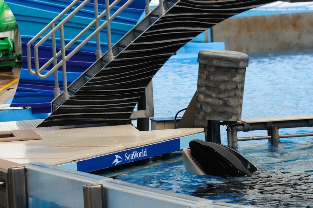 Photo Credit: We Animals - Jo-Anne McArthur :www.weanimals.org : 'An Orca Whale at SeaWorld, Florida 2011'