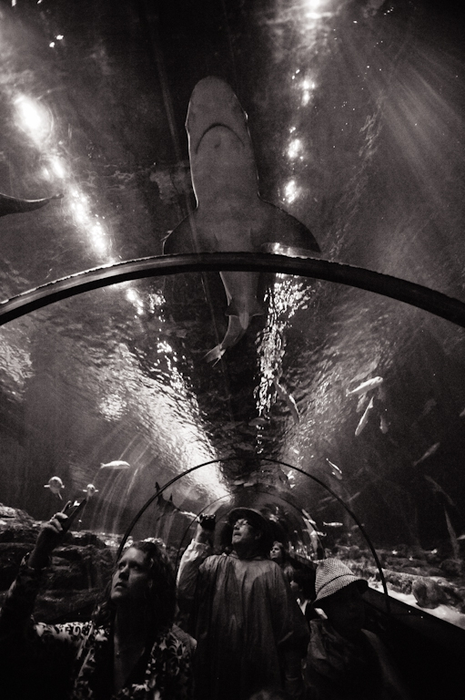 We Animals - Jo-Anne McArthur : On display at SeaWorld, Florida. 2011.