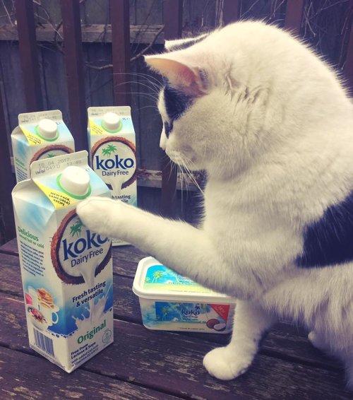 Koko Dairy Free Milk
