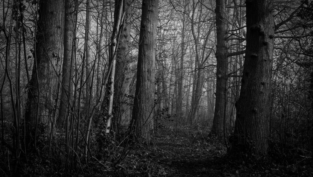 Trees d (2 of 2)-2.jpg
