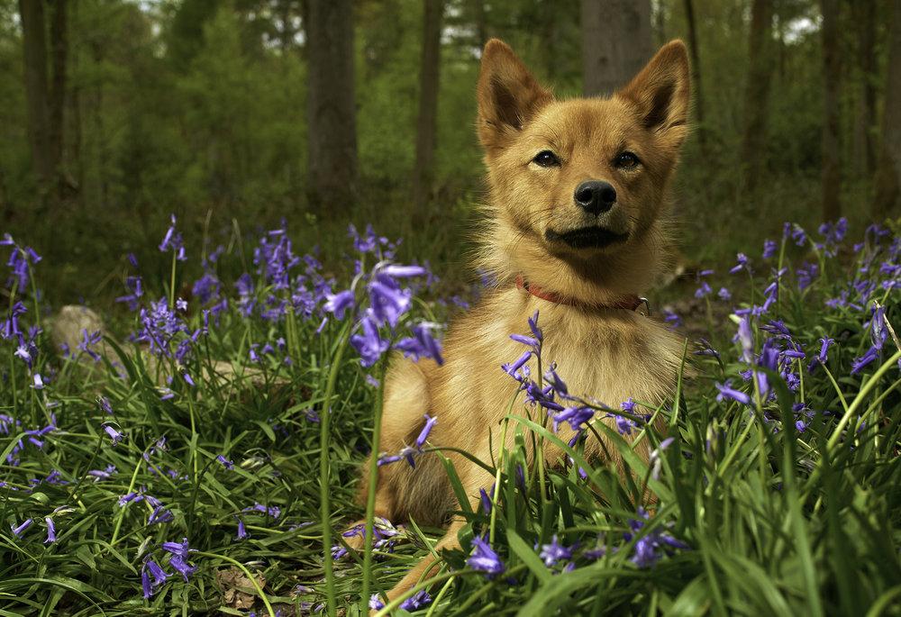 cecily dog small 3.jpg