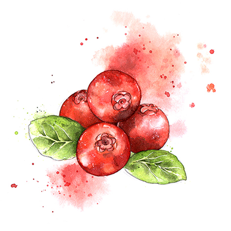 Cranberries colour small.jpg