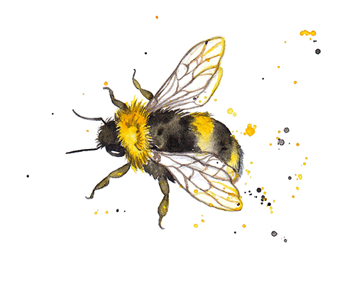 Pattern Design Honey Bees Bumble Amy Holliday Illustration