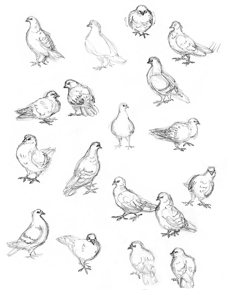 Sketchbook Bird Drawings Street Pigeons Amy Holliday Illustration