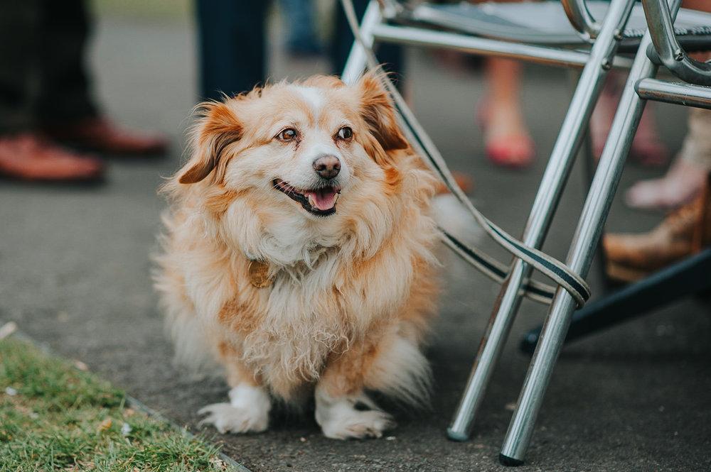Dog at wedding at Clissold House London