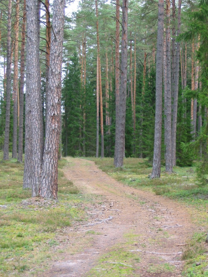 "www.dreamstimefree.com""Road in the Forest"""