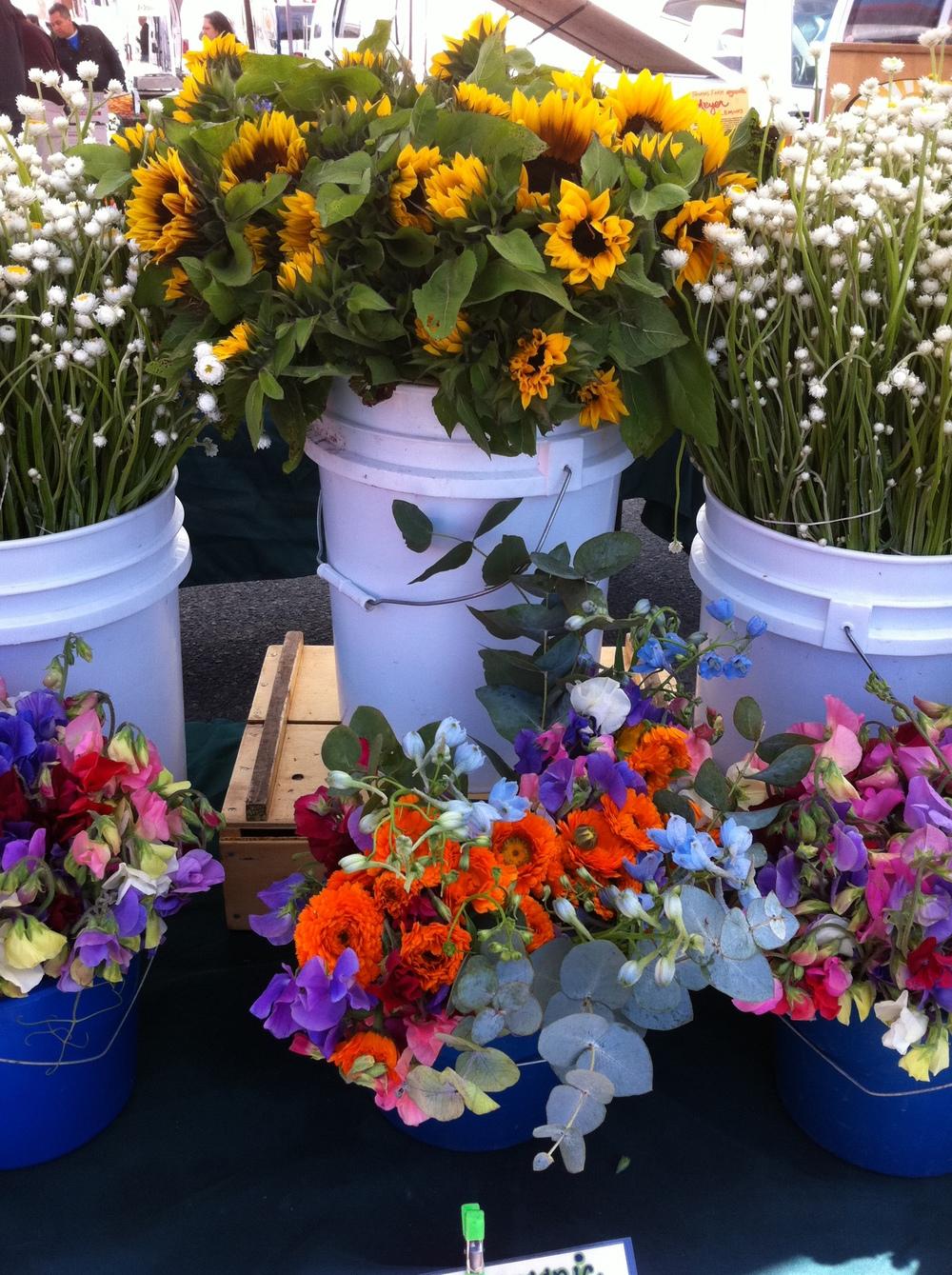 flowers - fmc photo2.JPG
