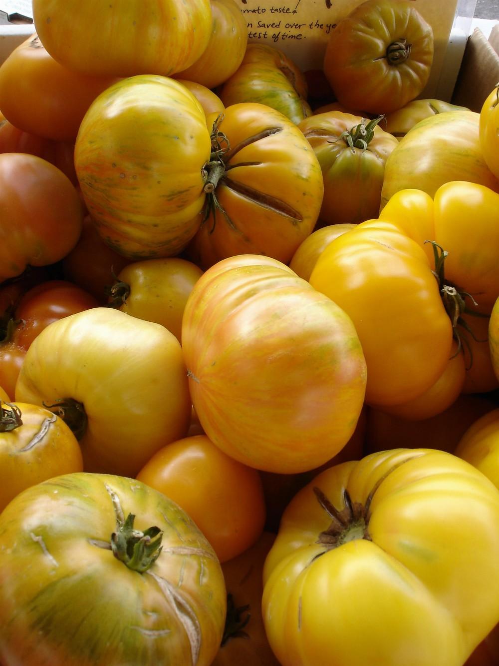 tomatoes13.jpg