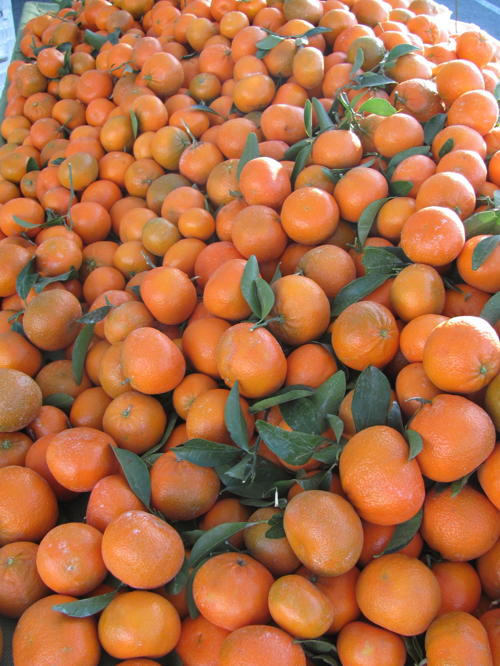 Oranges at Fort Mason Center Farmers' Market