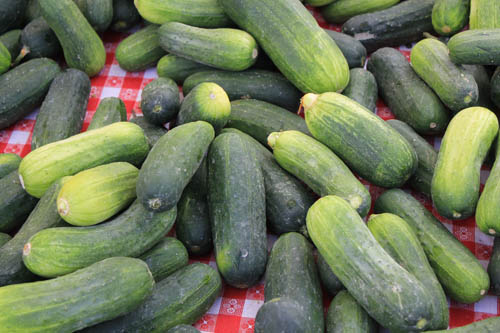 San Leandro Farmers' Market at Bayfair Center pickling cucumbers
