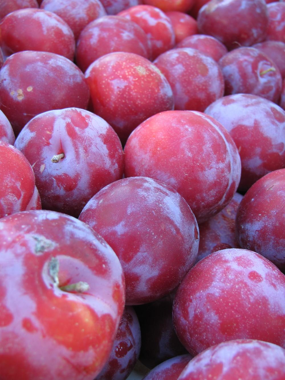 Saratoga Farmers Market plums