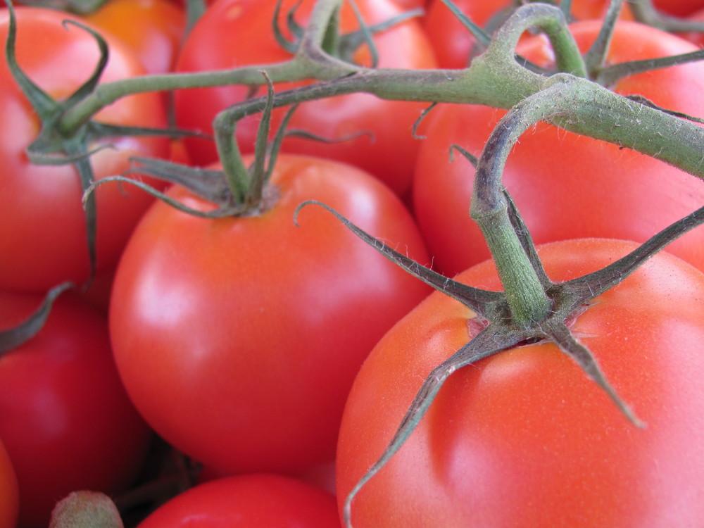 Saratoga Farmers Market tomatoes on the vine
