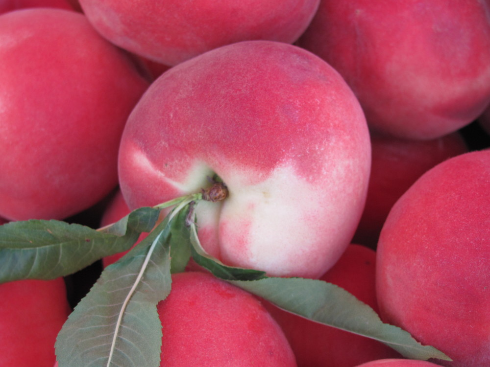 Saratoga Farmers Market white peaches