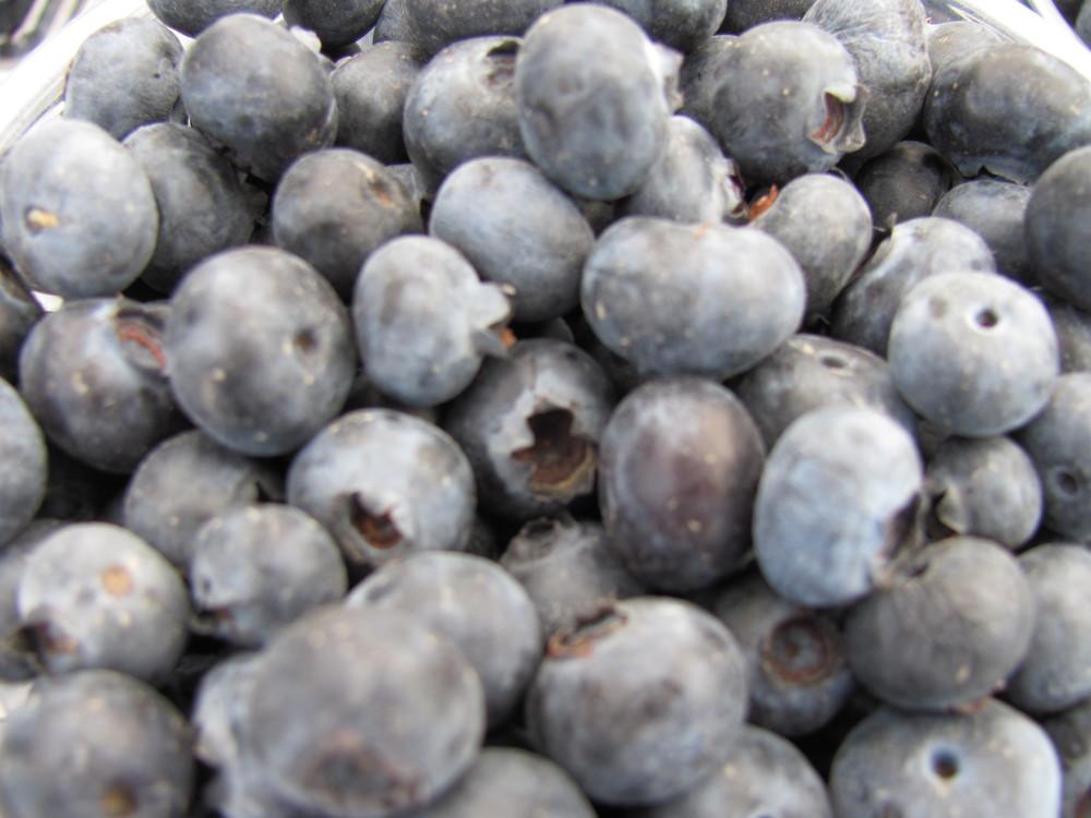 Saratoga Farmers Market blueberries