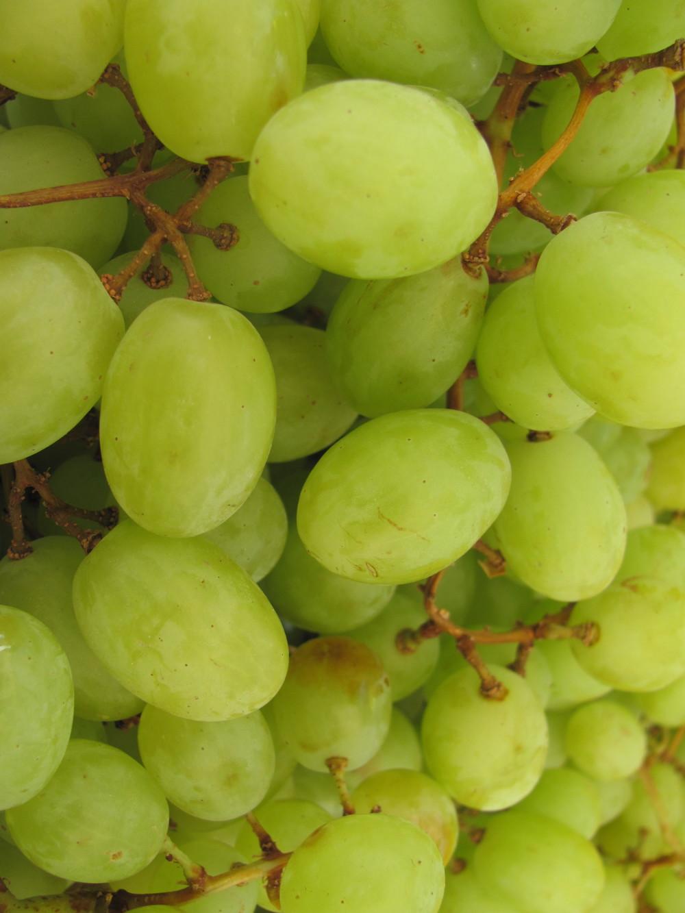 Saratoga Farmers Market green grapes
