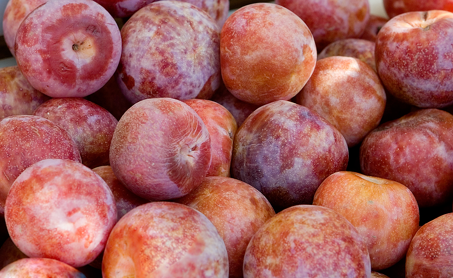 Pluots-harvested1.jpg