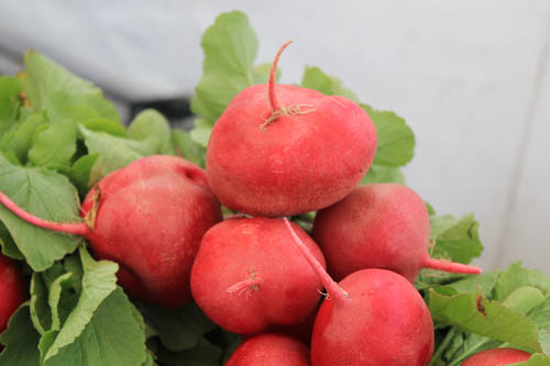 Red radish.JPG