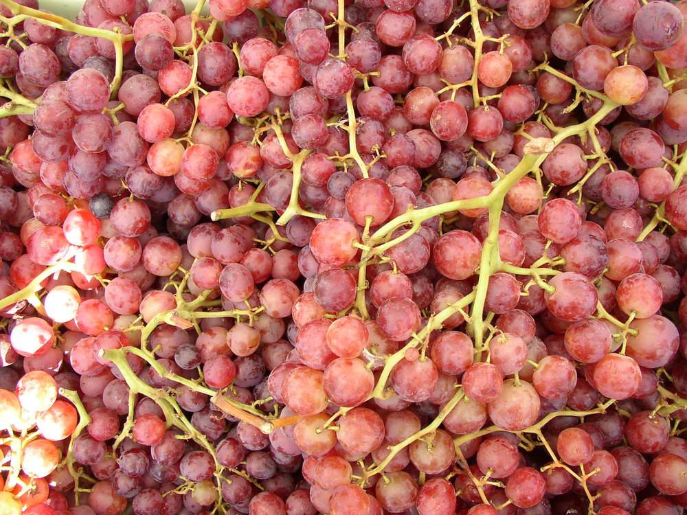 grapes10.jpg