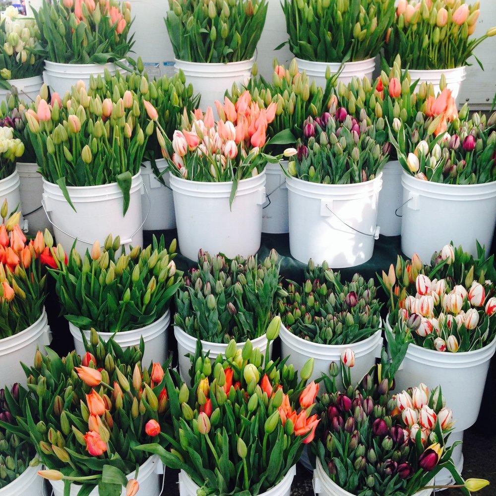 tulips fmc.jpg
