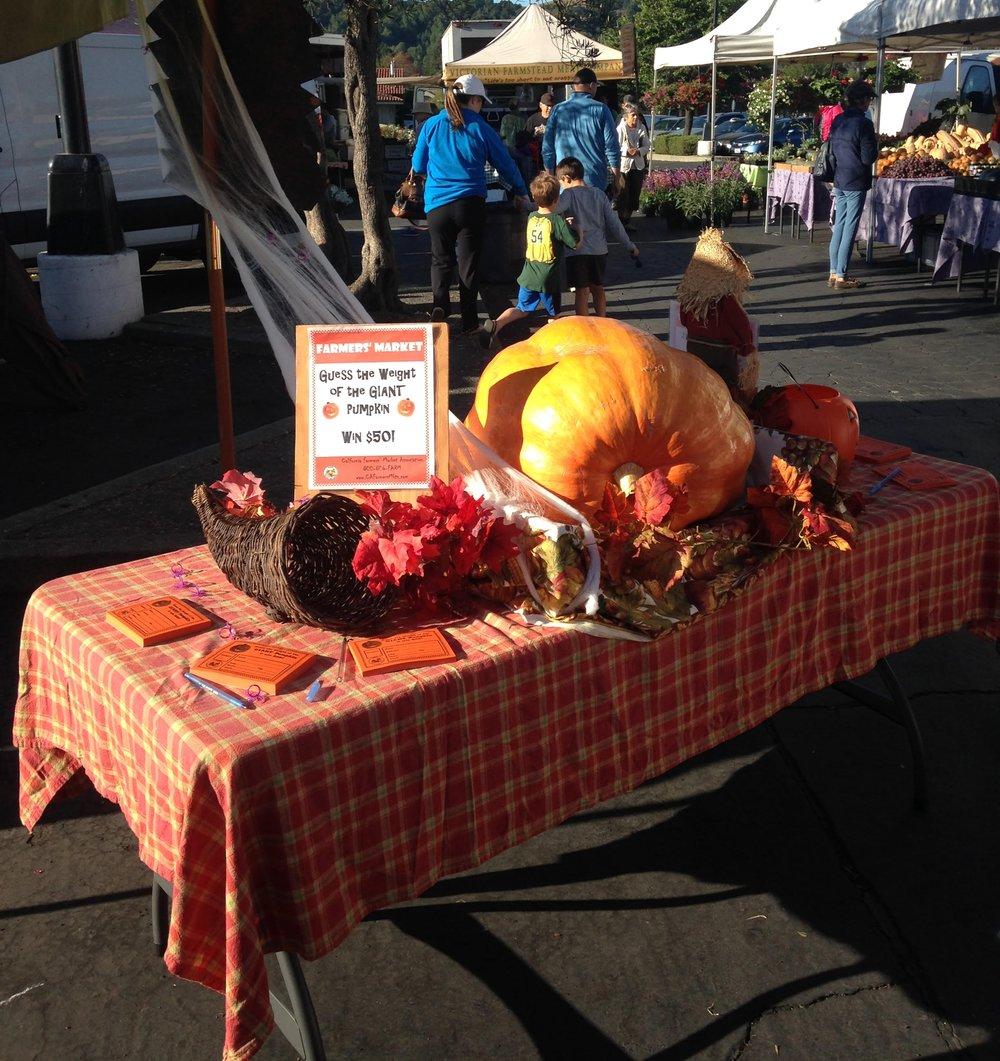 giant pumpkin.jpg