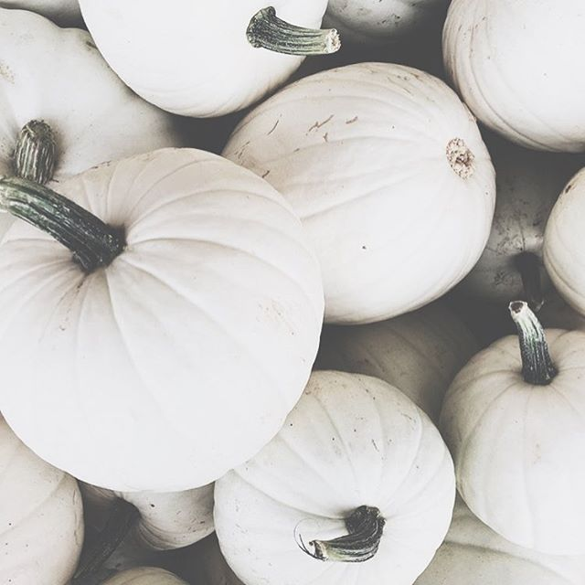 give thanks. enjoy simplicity. breathe in + take in the beauty around us. (📷 @mandinelson_ ) #wbcolife #givethanks #pumpkins #happythanksgiving #simplicity