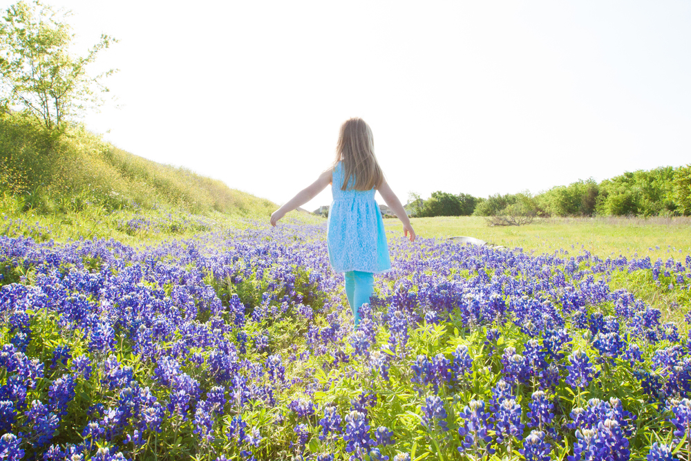 Bluebonnet Mini-Sessions
