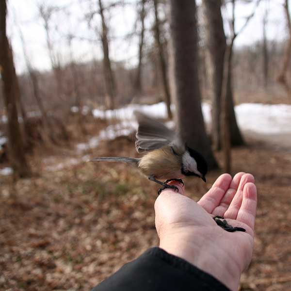 Chickadee lands on photographer artist Christine Montague