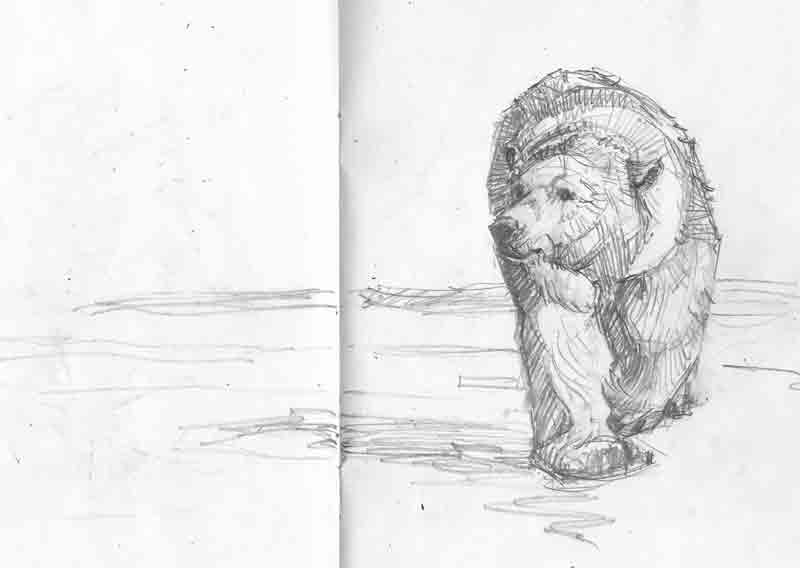 Polar Bear Sketch copyright Christine Montague 2013