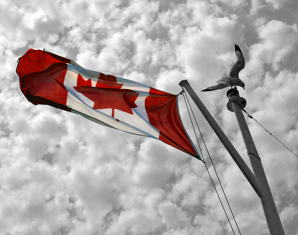 Seagull feeling (and riding) free on ferry mast with Canadian flag. Copyright Christine Montague www.christinemontague.com
