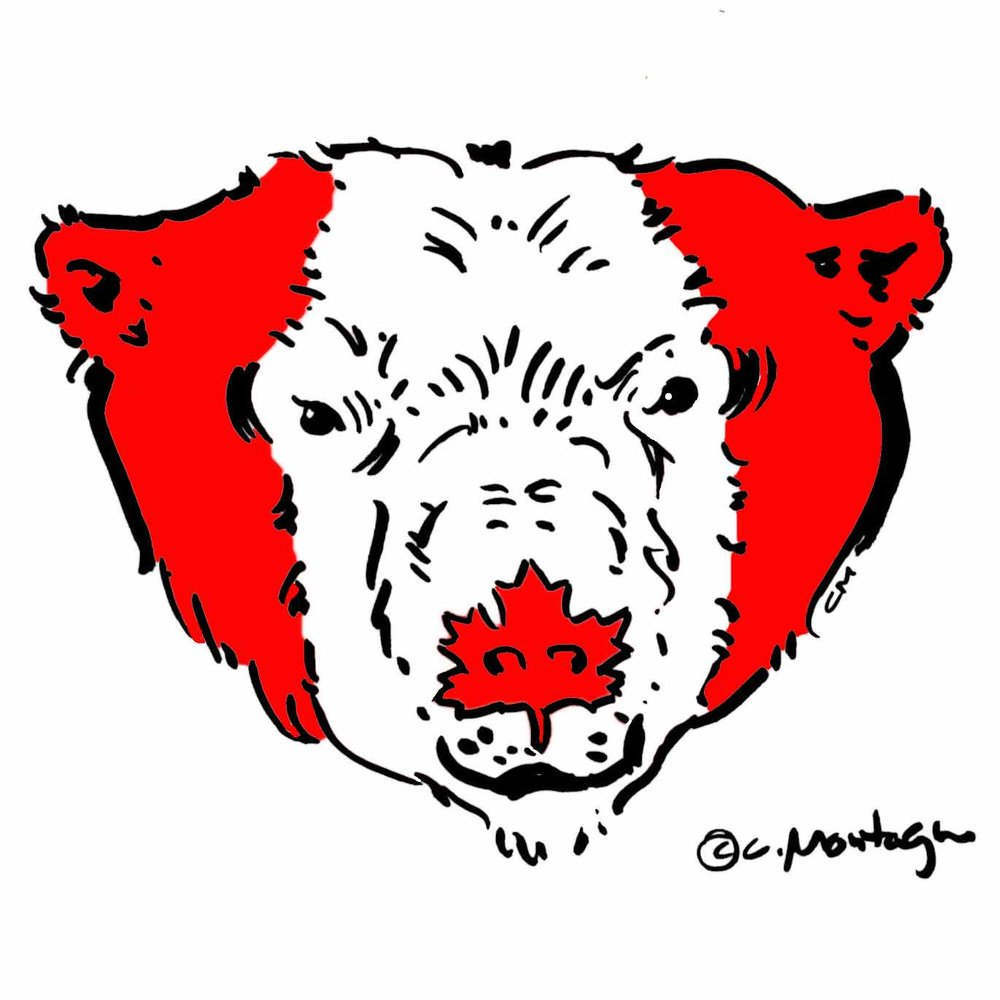 Canada-Day-Bear-1.jpg