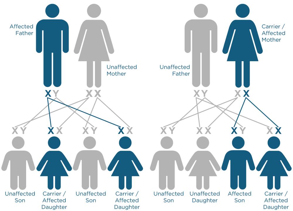 x-linked-inheritance.png