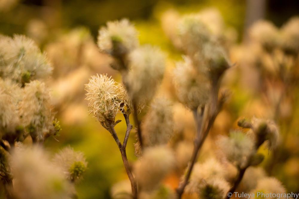 Flower-2022.jpg