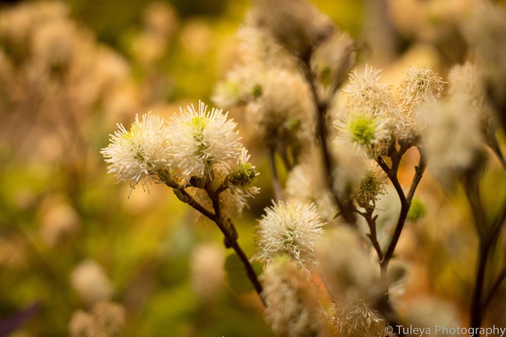 Flower-2023.jpg