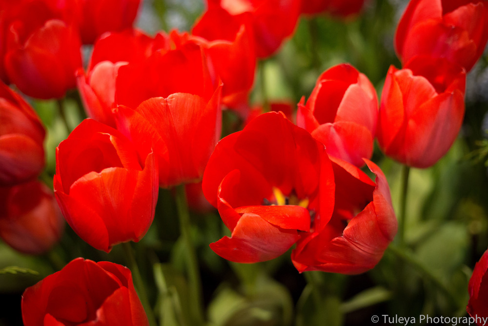 Flower-2040.jpg