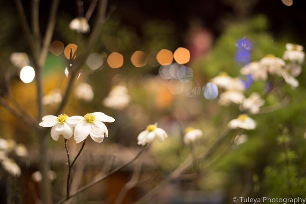 Flower-2055.jpg