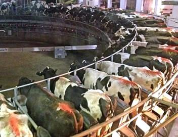 dairy cafo.jpg