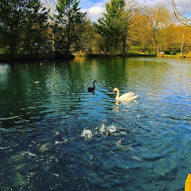 """Don't be afraid of being different be the afraid of being the same as everyone else""  Lovely setting in the #Cotswolds #blackswan #senditcolourful #beDifferent"
