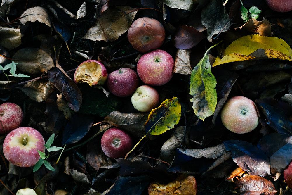 apples.jpeg