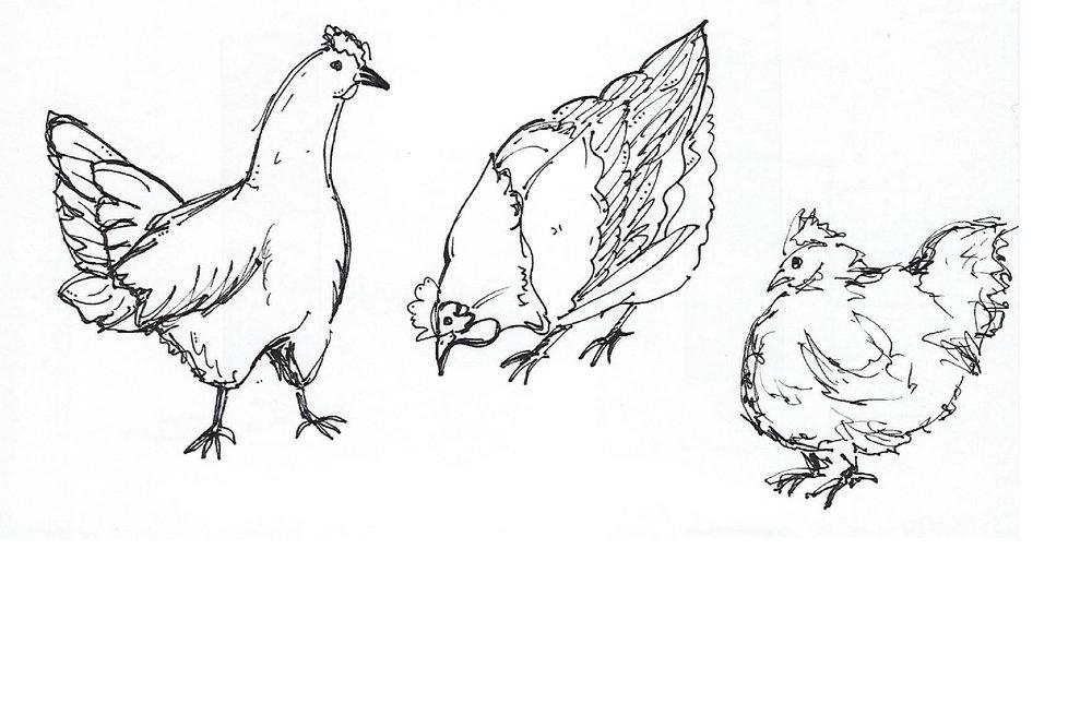 chickensketch-01.jpg