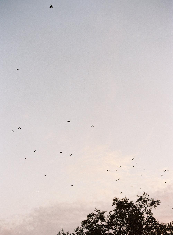 birds_cox.jpg