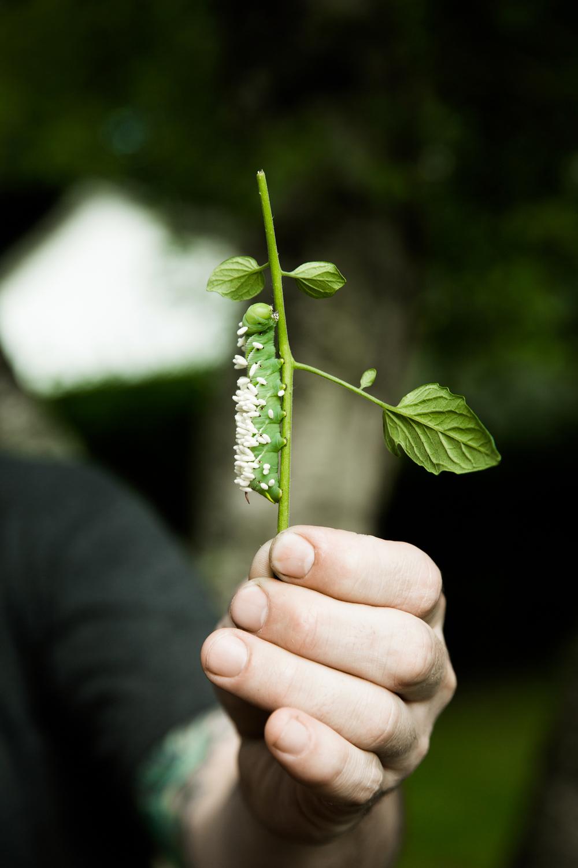 Caterpillar_Garden_EvaDeitchPhotography