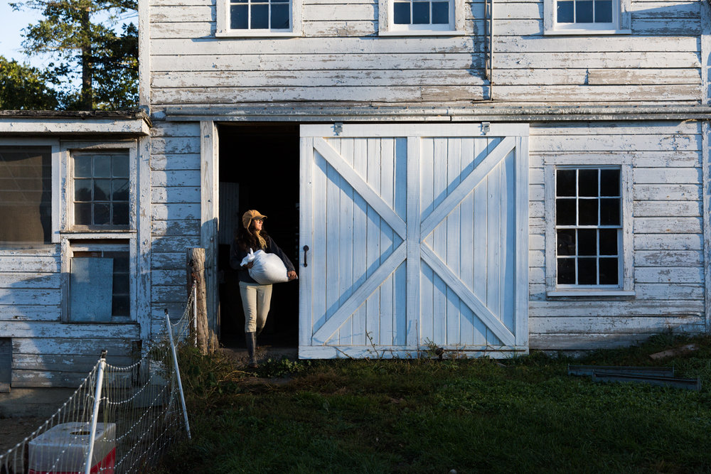 Glynwood Eva Deitch Photography Livestock-6.jpg