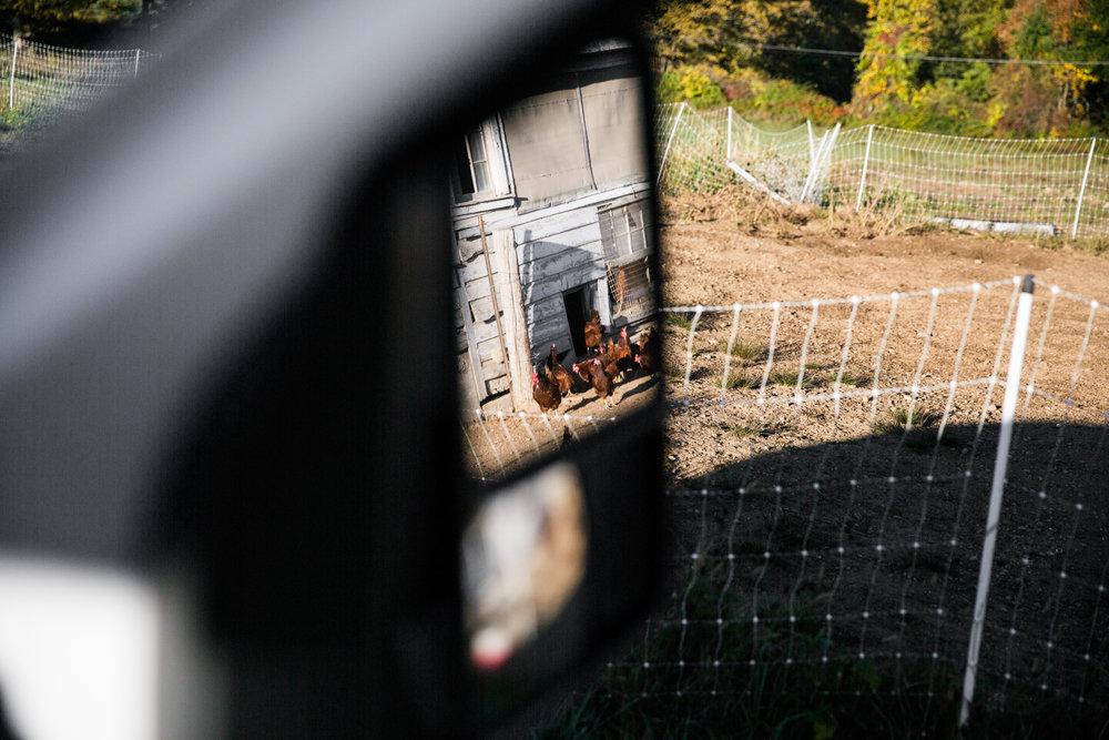 Glynwood Eva Deitch Photography Livestock-10.jpg