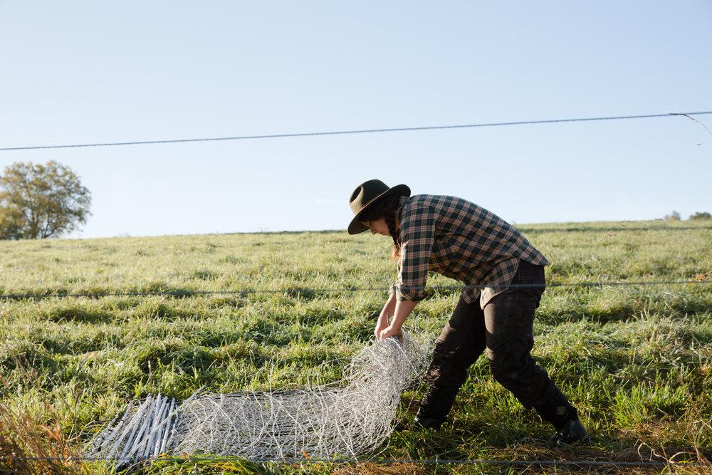 Glynwood Eva Deitch Photography Livestock-11.jpg
