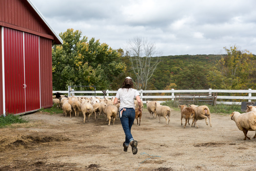 Glynwood Eva Deitch Photography Livestock-18.jpg
