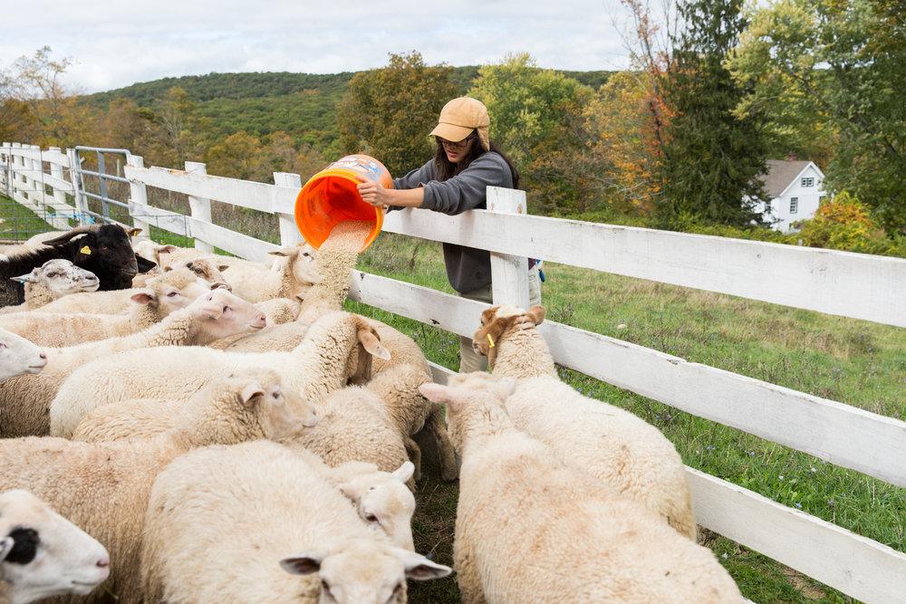 Glynwood Eva Deitch Photography Livestock-19.jpg