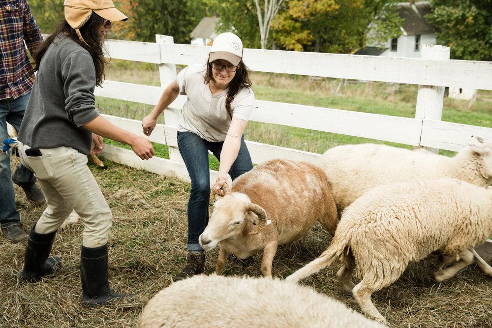 Glynwood Eva Deitch Photography Livestock-23.jpg