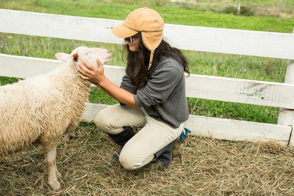 Glynwood Eva Deitch Photography Livestock-24.jpg