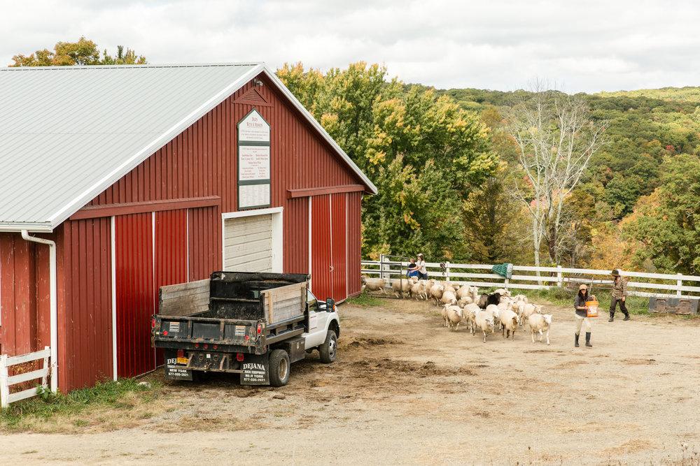 Glynwood Eva Deitch Photography Livestock-28.jpg