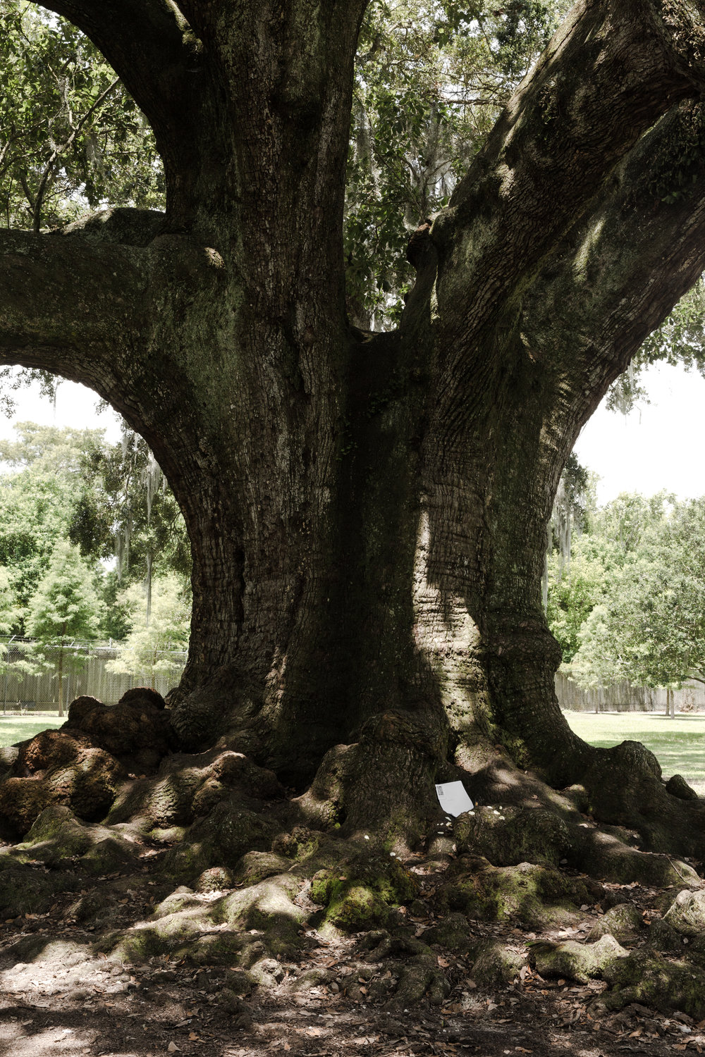 Tree of Life - Audubon Park